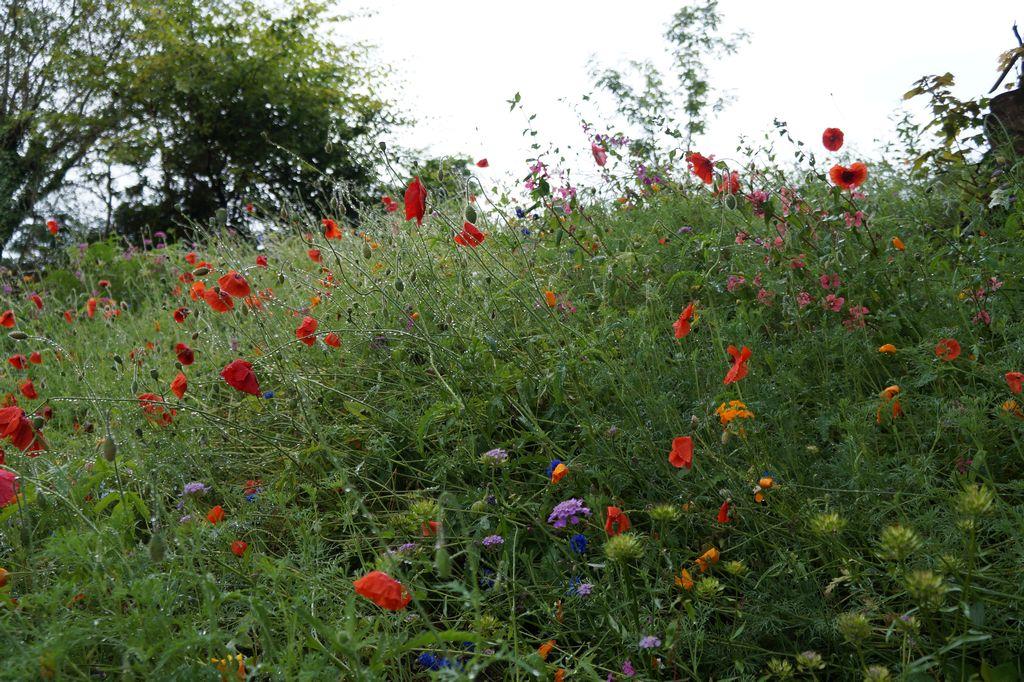 I fiori selvatici lungo la Western Way